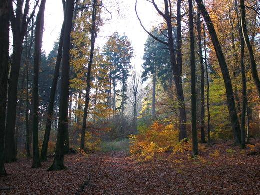 Herbstimpressionen im Neheimer Stadtwald