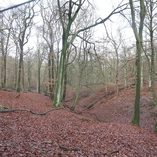 der Wald.jpg