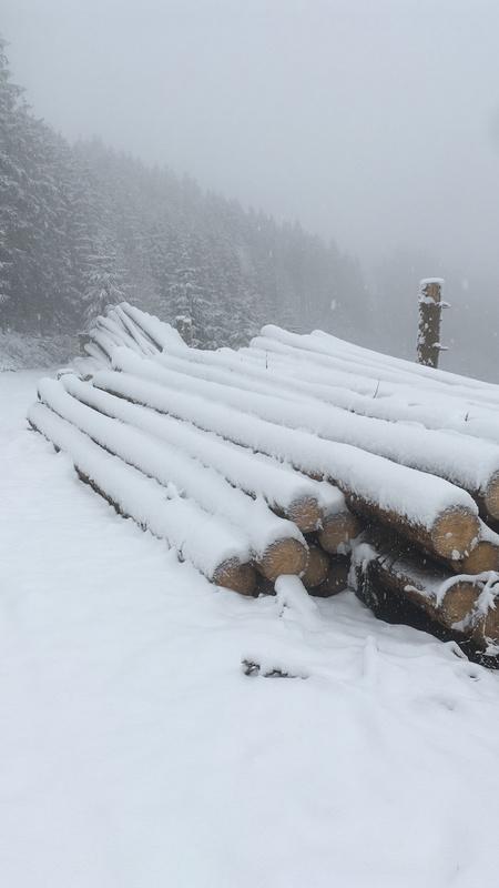 Der Sauerländer Wald wartet auf die Reise nach China.jpg