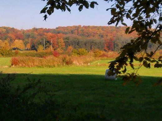 Goldener Oktober Gerresheim.jpg