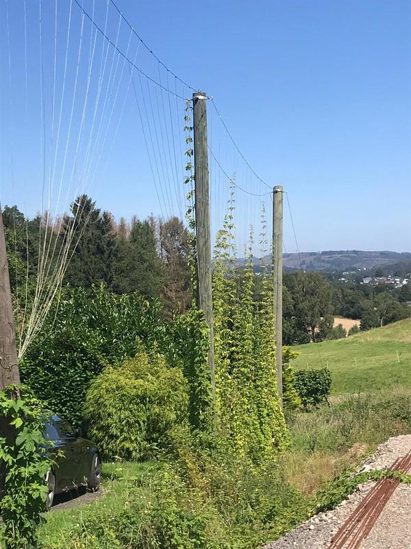 20210814 Bierweg-3.jpg