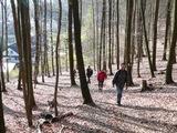 Mitten durch den Laubwald