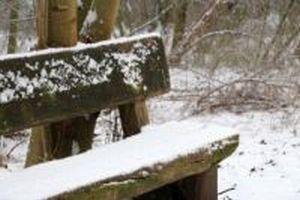Winterwandern im Bürenbruch