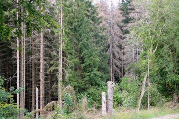 Sorge um den deutschen Wald