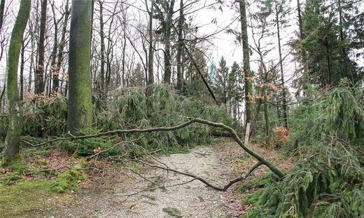 Achtung - umgestürzte Bäume!