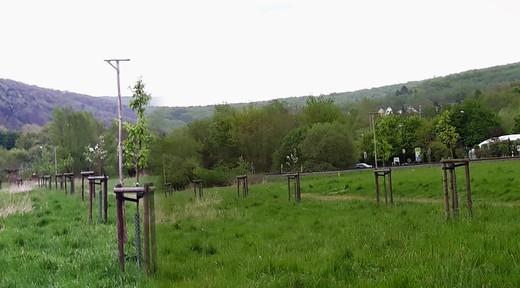 Streuobstwiese Altes Feld 2019