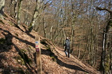 2. Habichtswaldsteig - Steilhang