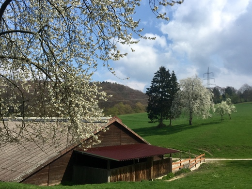 Alter Hof zwischen üppiger Frühlingsblüte auf der Tour um Hattingen