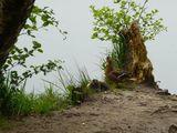 17.0514 Der See