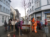 31.3.15   SGV-Baumpflanzung in Haan