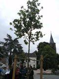 28.5.15 Einweihung Amberbaum, Marktplatz