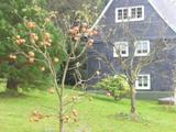 4.11.15 Apfelweihnachtsbaum
