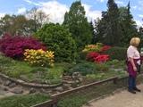 13.05.2017 Wandern um Solingen-Wald - Azaleen im Botanischen Garten Solingen