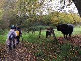 11.11.17 Wanderung von Millrath nach Erkrath, durch das Stinderbachtal