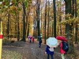 10.11.18 Im Regen mit Heinz durch die Ohligser Heide