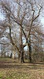 23.02.2019 Wunderschöner alter Baumbestand im Park von Schloss Kalkum