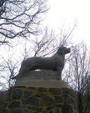 23.03.19 Rettungshund, Der Rüde von Berg