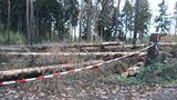 2.11.2019 Die Waldschäden sind ganz deutlich zu sehen.