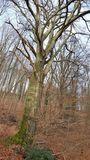 08.02.2020 Ein Prachtstück von Baum.