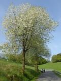 Frühling im Nahmer-Bachtal