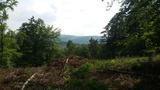 Im Wald bei Grürmannsheide
