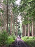 Unsere Wälder!