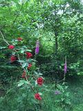 Wilde Blütenpracht