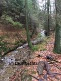 Foto 6 Im Lägerbachtal