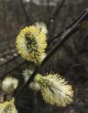 Bild 03 Die ersten Frühlingsboten