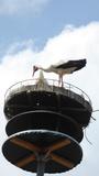Bild 07 Der Storch klappert in Fetzelhofen