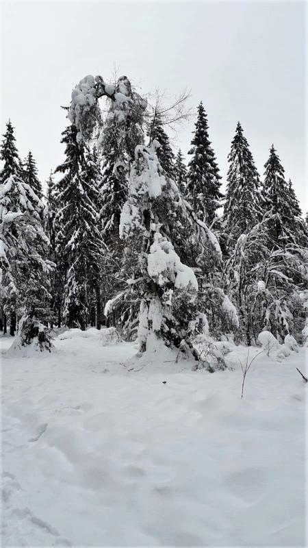 14.01.2021: Winter zum Jahresbeginn 2021 im Ebbegebirge