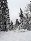 14.01.2021: Winterspaziergang auf dem Ebbekamm
