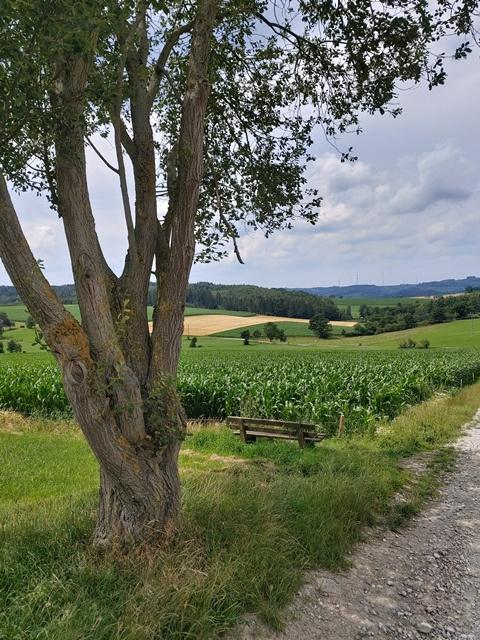 Blick in die Felder