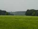 Weizenfeld