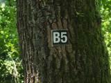 4 B5 Brilon