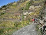 06 Rotweinwanderweg