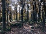 9 - Im steinernen Wald